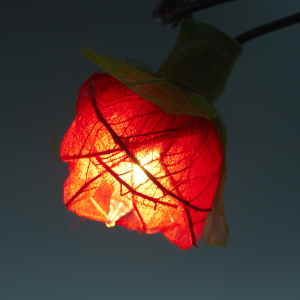 Red Decorative String Lights : 9Ft Romantic Rose Lights Decor - 110V AC String Lights- Red